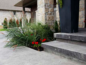 front steps and plants